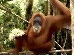 Bild von 06 DAYS / 05 NIGHTS BUKIT LAWANG & LAKE TOBA TOUR