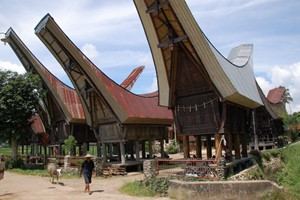 Bild von BUGIS – TORAJA INCL. TANJUNG PALETTE BEACH 6 Days / 5 Nights